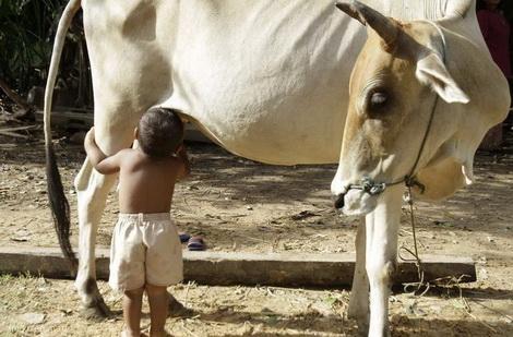 Молоко как продукт в истории